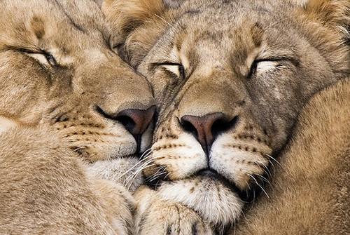 lien-amoureux.jpg