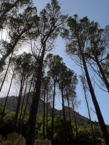 Sardaigne-Cascade-Villacidro.jpg