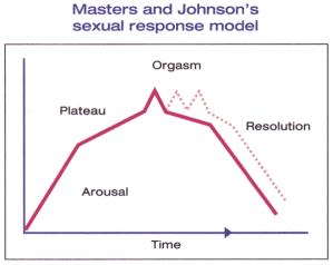 Cycle réponse sexuelle