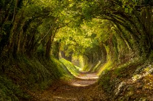 Chemin dans la forêt